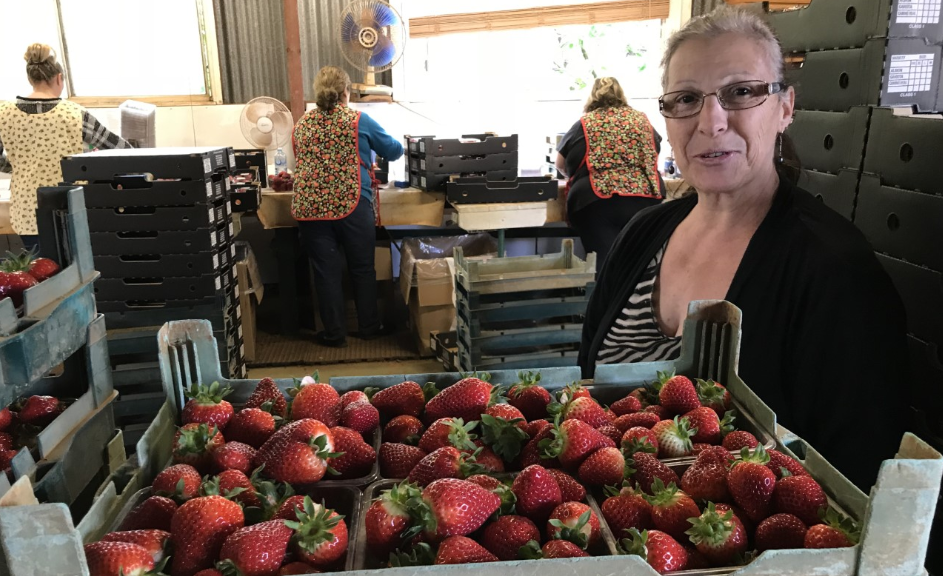 Frances at Kookaberry Farm strawberries
