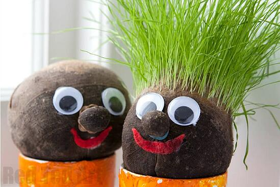 Make a grass head and let your child be the hair dresser!