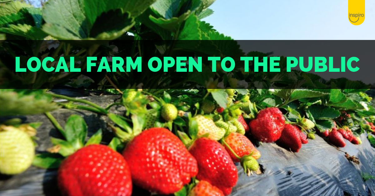 Local strawberry, blueberry and raspberry farm open to public