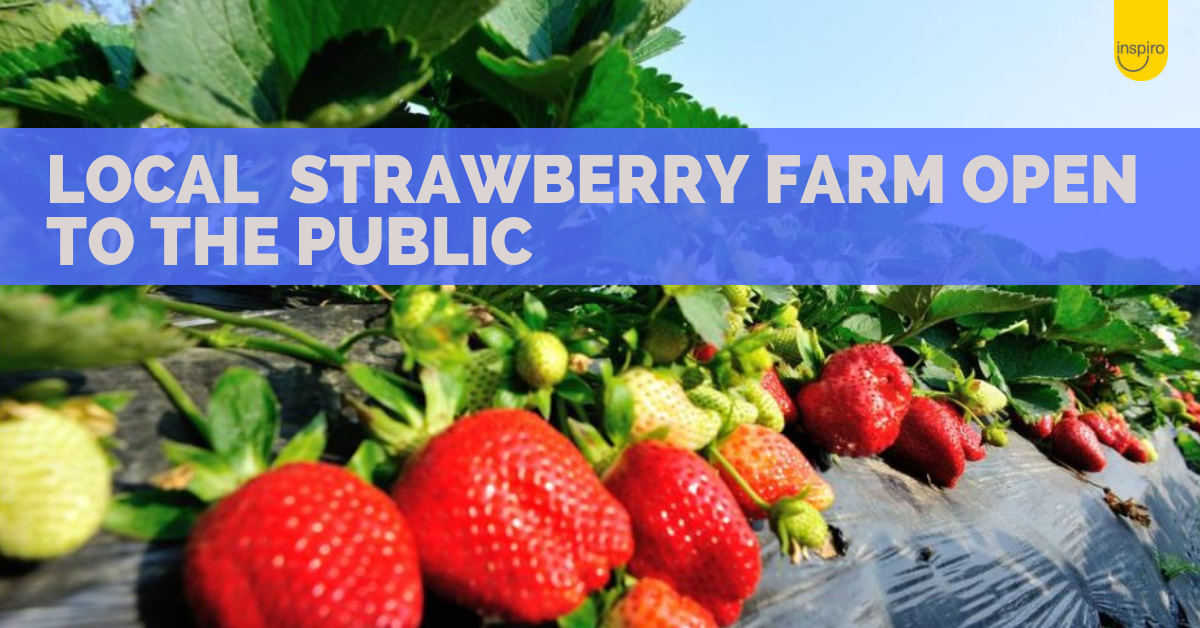 Local strawberry farm and cafe open to the public in November